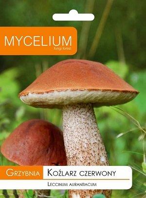 Parastās apšubekas (apšu kundziņš) micēlijs 10 g Mycelium
