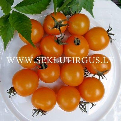 Tomāti SV 0948 TS F1  3 gab De Ruiter Seeds