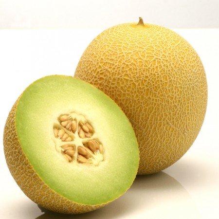 Melone JUCAR RZ F1  5 gab Rijk Zwaan