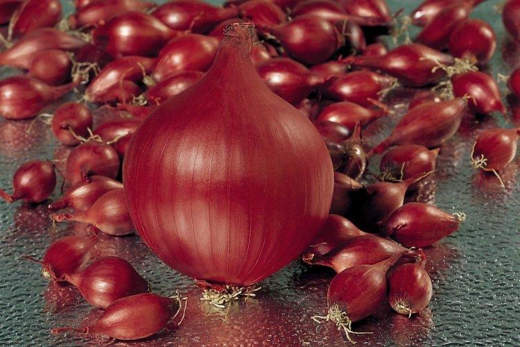 Sīksīpoli RED BARON 1 kg Frakcija: 14/21 Holande