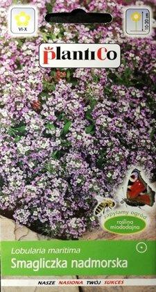"""Jūrmalas lobulārija (Saldā alise) violeta 0.5 g """"PlantiCo"""""""