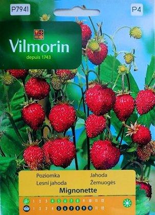 Zemenes MIGNONETTE  100 mg Vilmorin