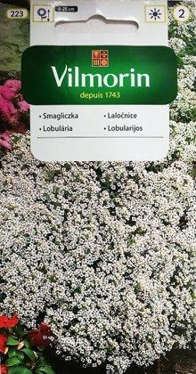 Jūrmalas lobulārija SCHNEETEPPICH (Saldā alise) 1 g Vilmorin