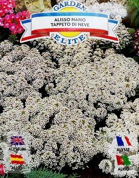 Alise Alisso nano Tappeto di neve 0.5 g Galassi Sementi