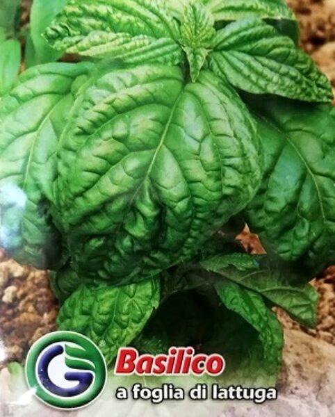 Baziliks salātu 4 g Galassi Sementi