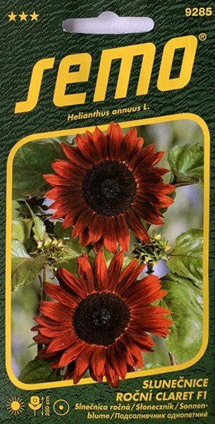 Saulespuķes dekoratīvās Claret F1 8 gab Semo