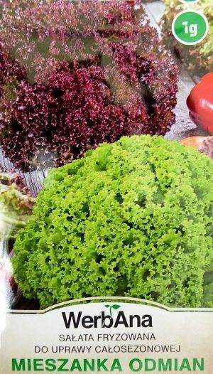 Salāti MIX (Lollo Bionda un Lollo Rosa tipa maisījums) 1 g VerbAna