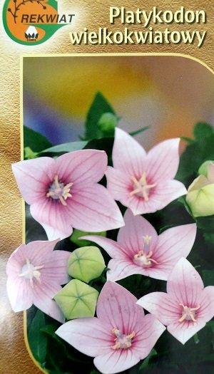 Lielziedu platpulkstenīte rozā 0.1 g Rekwiat