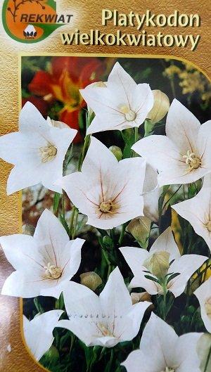 Lielziedu platpulkstenīte balta 0.1 g Rekwiat