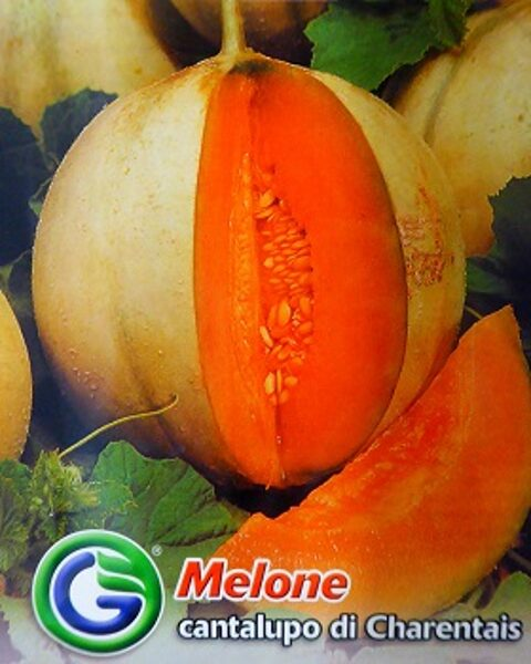 Melone cantalupo di Charentais 4 g Galassi Sementi