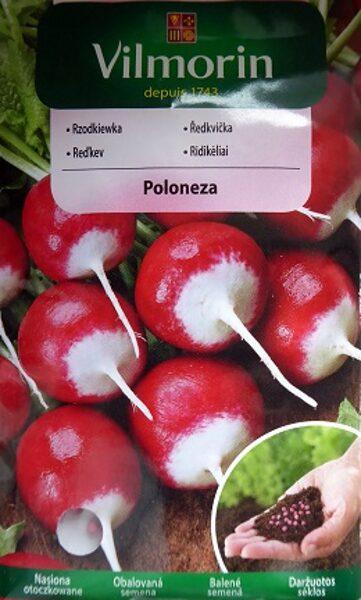 Redīsi Poloneza 300 gran Vilmorin