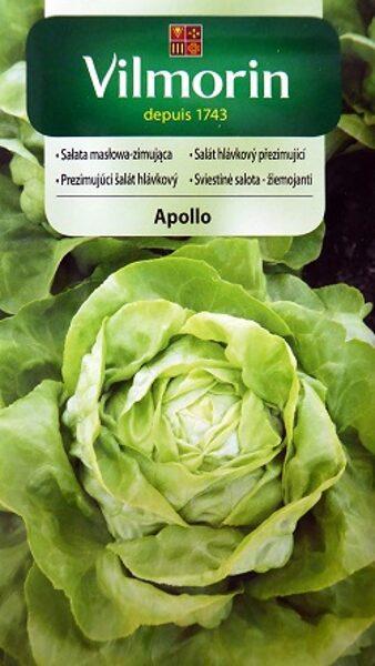 Salāti galviņu APOLLO 1 g Vilmorin