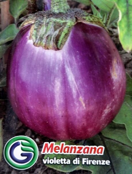 Baklažāni Violetta di Firenze 2.2 g Galassi Sementi