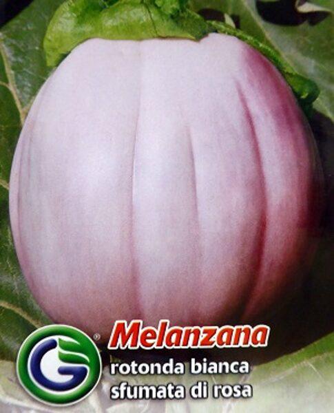 Baklažāni Bianca sfumata di Rosa 2.2 g Galassi Sementi