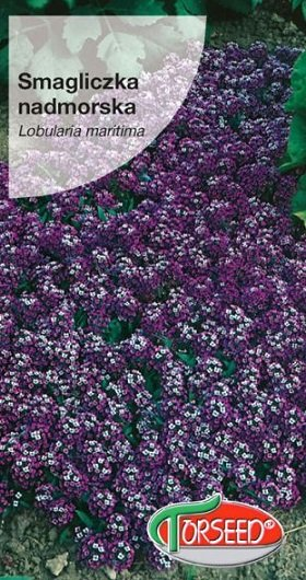 Jūrmalas lobulārija violeta 1 g Torseed
