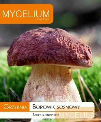Priežu baravikas micēlijs 10 g Mycelium