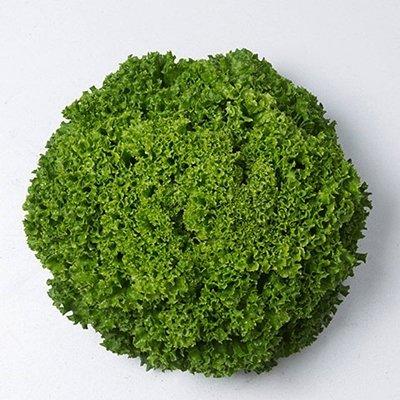Salāti lapu Ilema 500 gran Enza Zaden