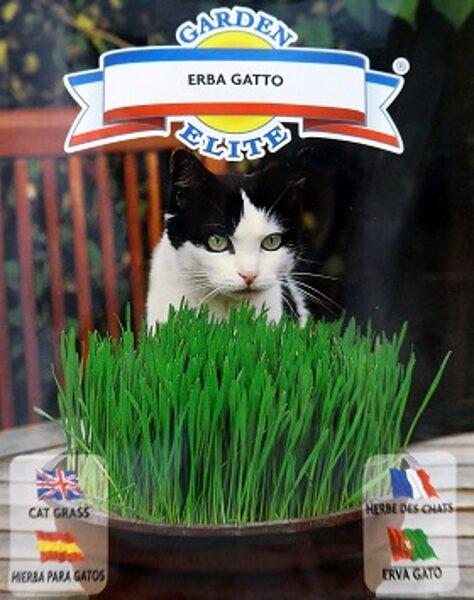 Kaķu zāle ar īsto kaķumētru 3.5 g Gallasi Sementi