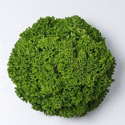 Salāti lapu  Ilema 20 gran Enza Zaden