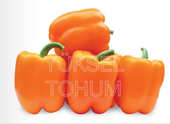 Paprika Clementine F1 5 gab Yuksel Tohum